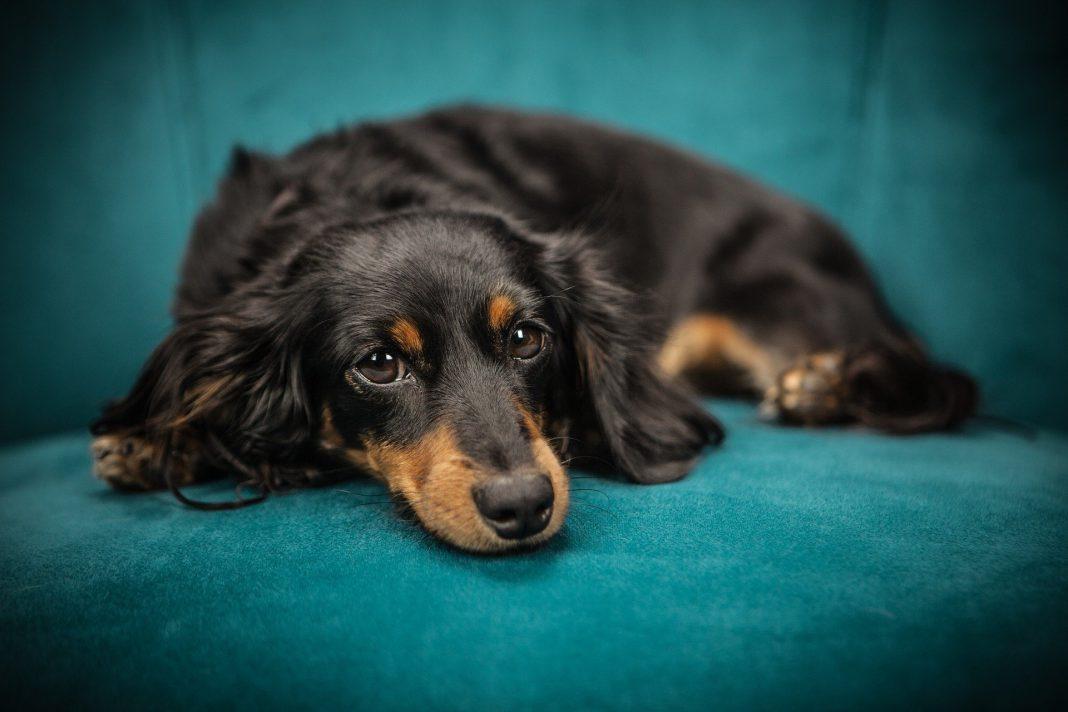 Gdzie zorganizować legowisko dla psa? kobbieciarnia